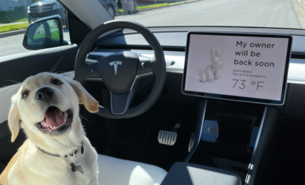 Keep Your Furry Friends Safe in a Tesla